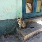 190913_ Asami_cats_s_1920